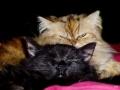 Dýna a černé kotě :-)